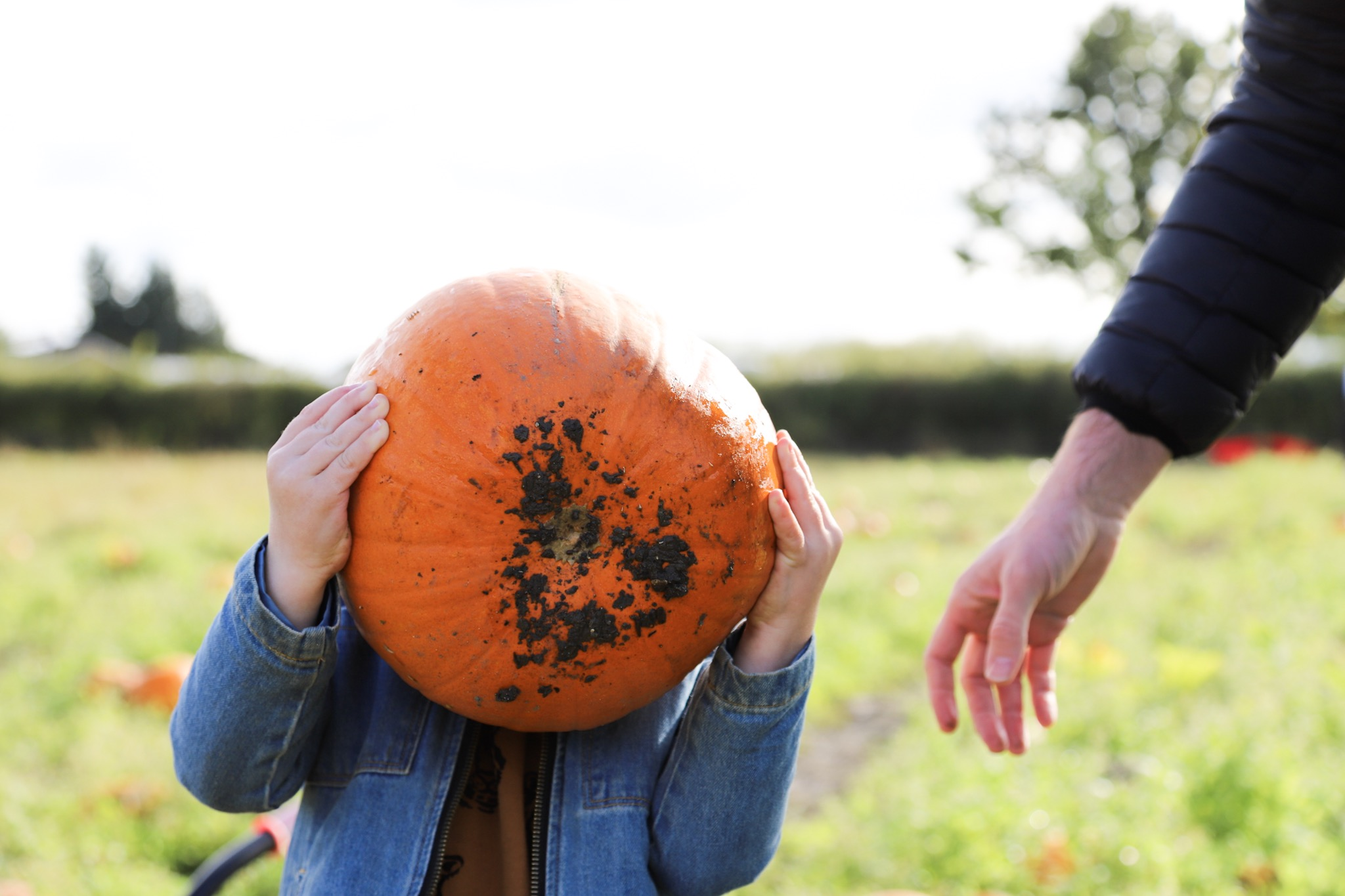 Child holding pumpkin above his face